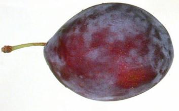 Velikost plodu ve 12.týdnu těhotenství